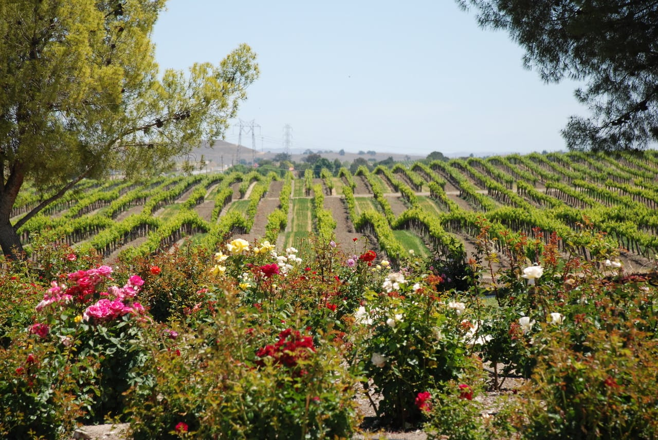 Vineyard and flowers